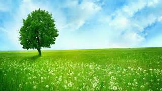 Nature Wallpapers HD P...