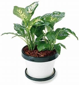 Plante Pour Appartement : belles plantes les conseils du g ant vert ~ Zukunftsfamilie.com Idées de Décoration