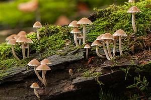 Pilze Auf Komposthaufen : pilze traumzeitmomente ~ Lizthompson.info Haus und Dekorationen