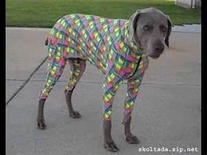 Funny Dog Halloween Costumes - YouTube