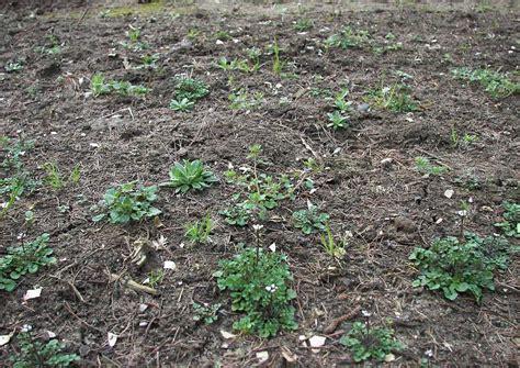 Unkraut Im Garten Unkrautbekämpfung Ohne Spritzmittel