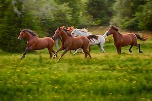 Five Galloping Horses by karenk - DPChallenge