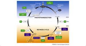 Photon Light by Retinoids For Treatment Of Retinal Diseases Trends In