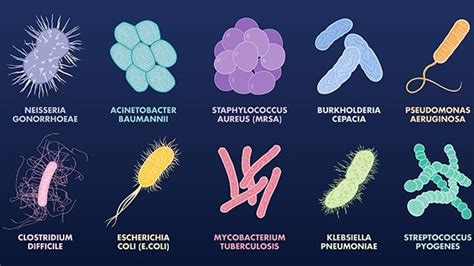 10 Most Dangerous Antibiotic-resistant Bacteria