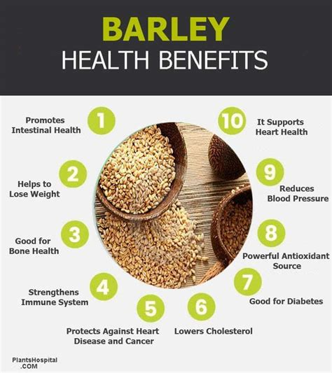 proven health benefits  barley  barley juice