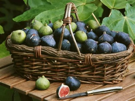 comment cuisiner les figues choisir et cuisiner la figue variétés recettes nutrition