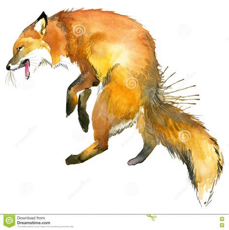 Fox. Fox Hunting. Cute Fox. Watercolor Fox Illustration ...