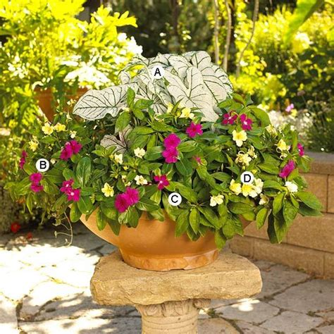 shade flowers for pots container garden recipes for shade shades punch and roses