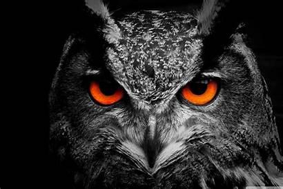 Owl Surface 4k Wallpapers Eye Desktop Tablet