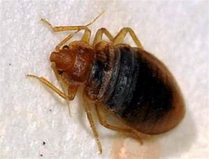 bedbugs prompt removal of 3 padded benches at phoenix With bed bugs arizona
