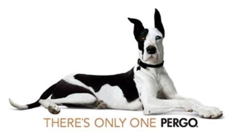 pergo flooring for pets flooring news pergo launches new commercial flooring line pergo pro offers superior design