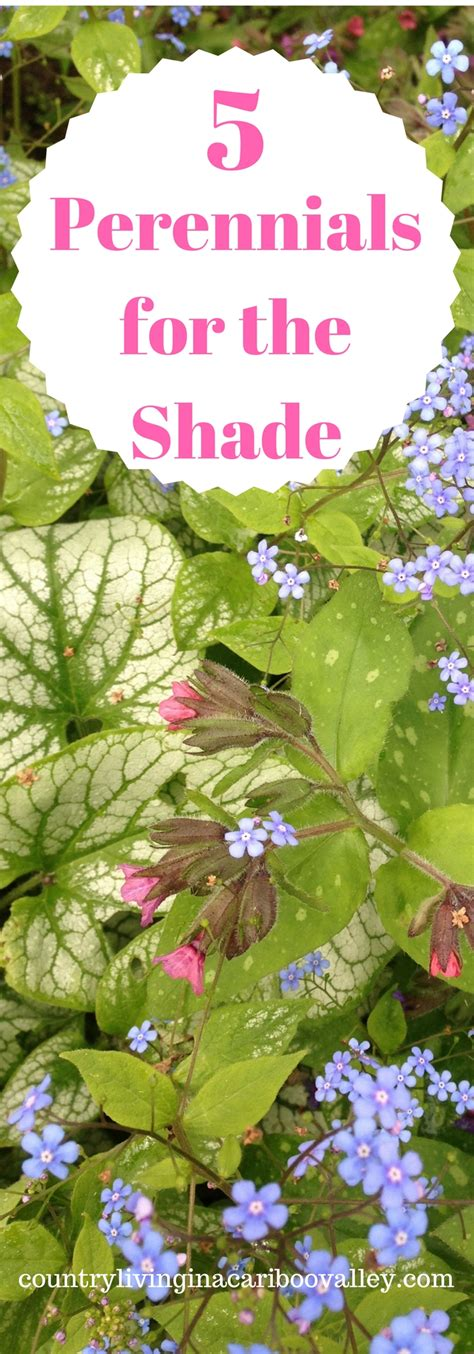 what plants grow every year the top 5 prettiest perennials that will grow in deep shade plant this year and they keep