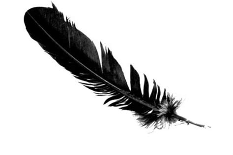 Black Feather  Signs Of Angels