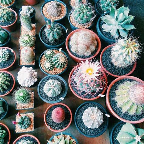 Cactus Market, Bangkok- Thailand