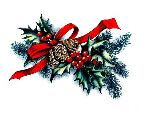 images christmas holly   clip art