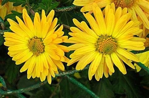 Bild: Blumen, Gelb, Pflanze, Fotografie von Igor