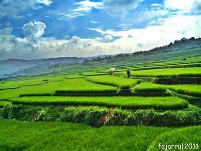 Pemandangan Sawah Indah Gambar Yang Desa Hijau