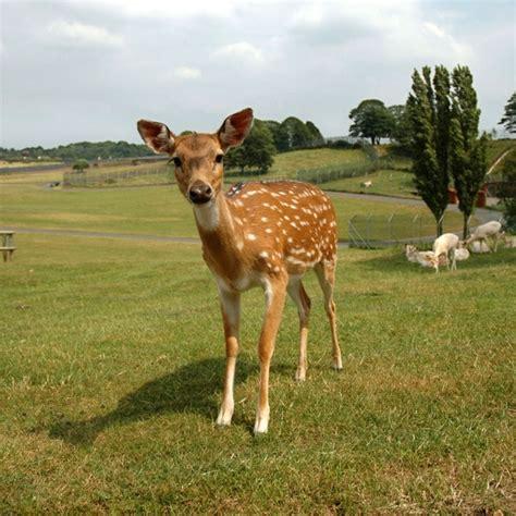 deer pictures  stock     stock