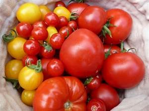 Tomaten Selber Ziehen : tomaten aus samen selber ziehen eine anleitung und ein paar tricks ~ Whattoseeinmadrid.com Haus und Dekorationen