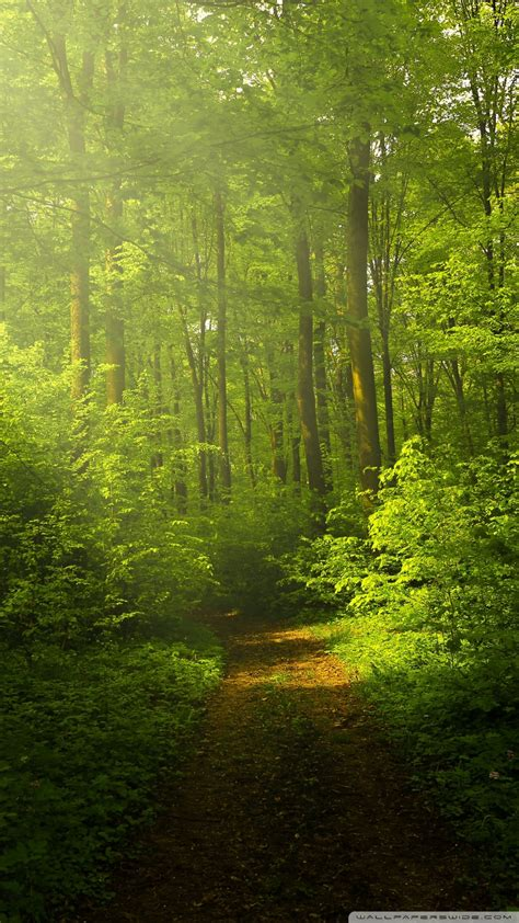 Wallpaper Of Green Forest by Nature Wallpaper Beautiful Nature Image Green Forest