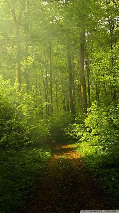 Forest Nature Wallpapers 4k Mobile Desktop Smartphone