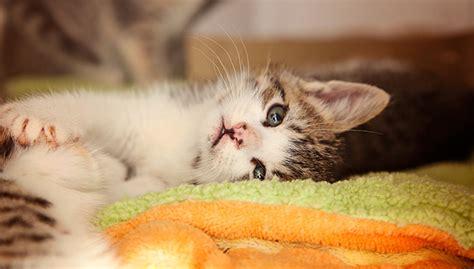 Kitten Nursery  Best Friends Animal Societylos Angeles