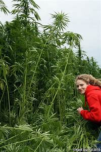 Hanf Zum Abdichten : cannabis von hanf zeit comments usualredant ~ Lizthompson.info Haus und Dekorationen