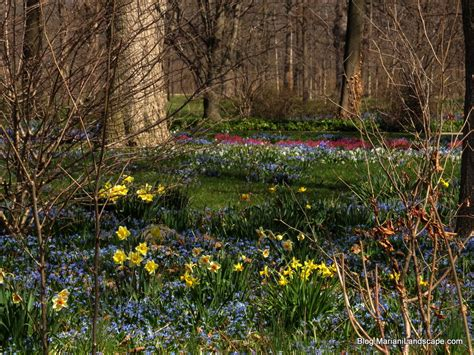 bulb gardens your spring bulb garden in the garden with mariani landscape