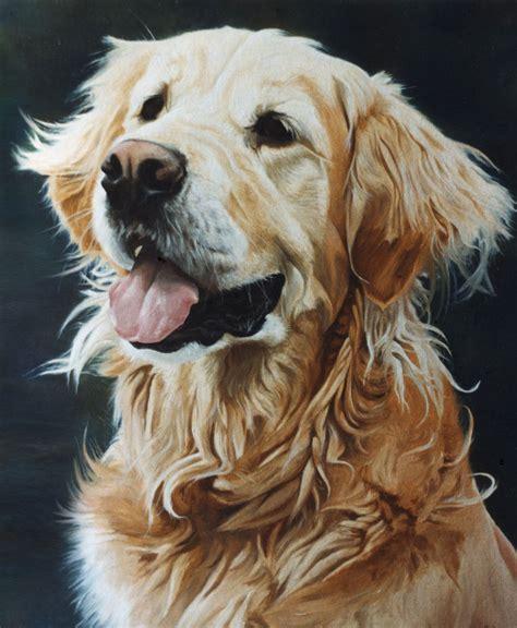 golden retriever portrait 1 oils on canvas