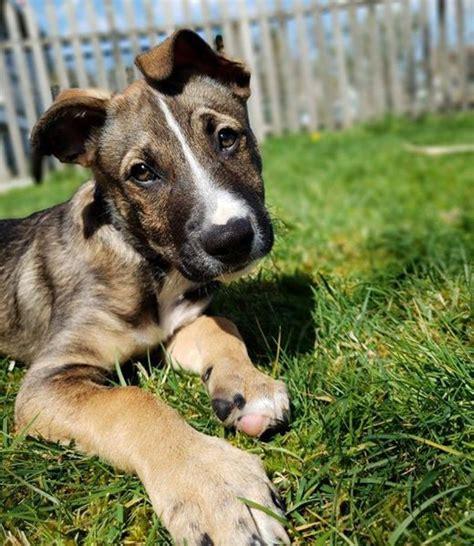 grateful dog animal rescue fundraiser  maine beer