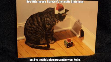 christmas cat  kucing
