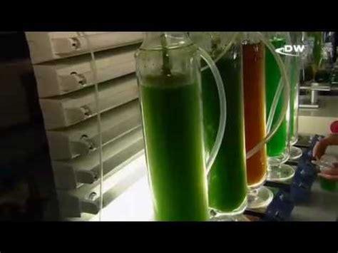 Биотопливо из водорослей топливо второго и третьего поколений