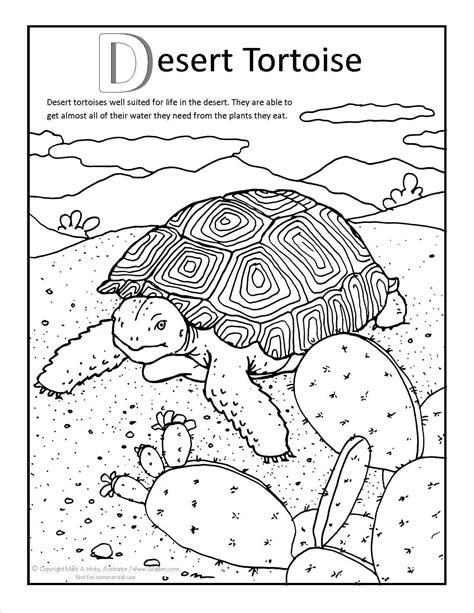 Desert Tortoise Coloring page at GilaBen.com | Tortoise color, Desert animals, Tortoise tattoo