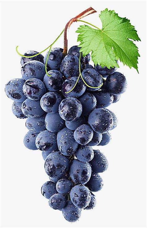 purple grape png clipart agriculture berry fruit blue