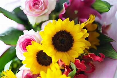 Roses Sunflowers Bouquet Pink Yellow Flower Petals