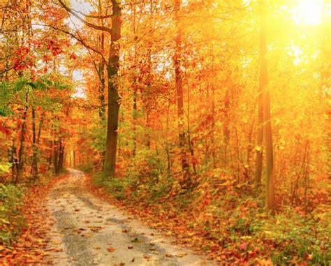fall colors in virginia spectacular fall foliage west virginia northern virginia