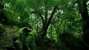 Jungle Wallpapers - ZyzixuN