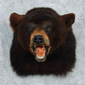Black Bear Mount For Sale #12959 - The Taxidermy Store