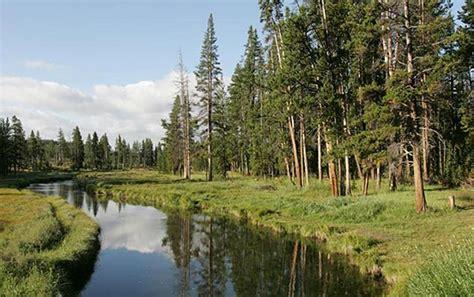 waters  life survey   riparian area yellowstone