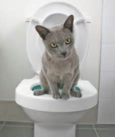 potty your cat 301 moved permanently