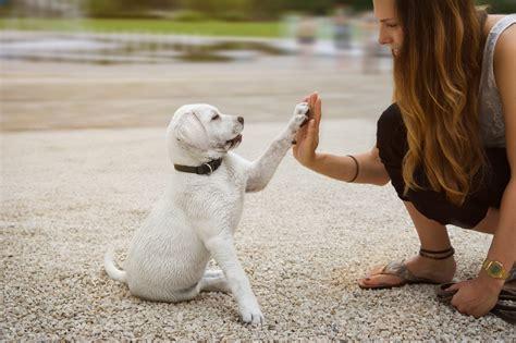 welpenerziehung grundlagen regeln tipps hundemagazin
