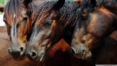 Wild Desktop Wallpapers Horse Horses Background Animals