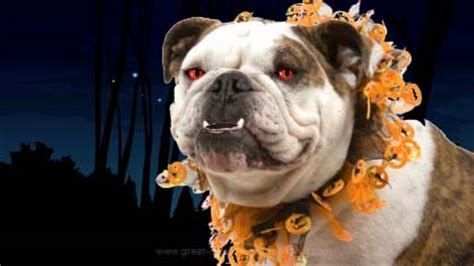 happy halloween bulldog  specials ecards greeting