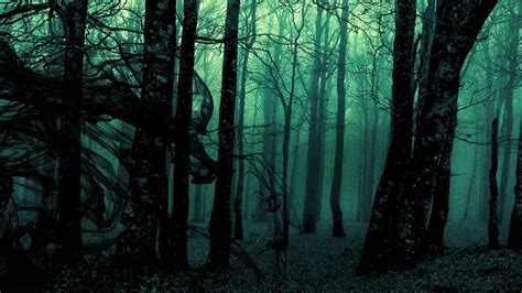 forest green trees dark wallpapers hd desktop