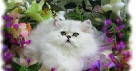 gambar kucing bagus