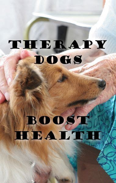how do animals help humans therapy dogs dr oz and the o jays on pinterest