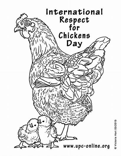 Coloring Respect Chickens Upc International