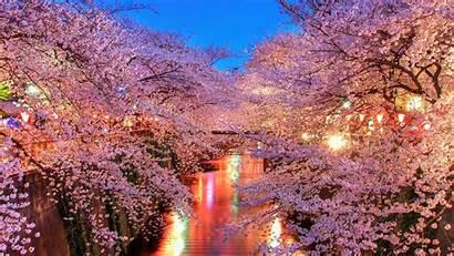 Sakura Blossom Hanami 4k Resolution Wallpapers Published