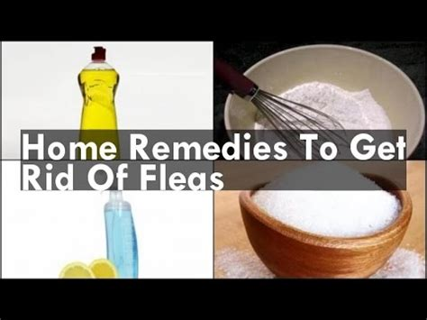 how to rid fleas in house home remedies to get rid of fleas
