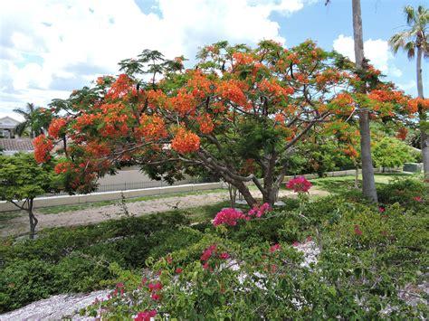 large flowering trees flower in sarasota florida 4k wallpapers